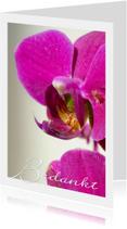 Bedankt Orchidee Paars