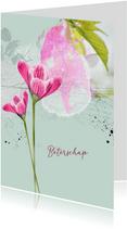Beterschap krokus roze