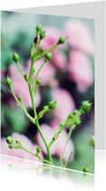 bloem pink rose