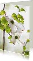 Bloemenkaart met Cornus
