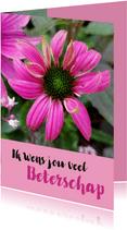 Bloemenkaart - Zonnehoed of Echinacea