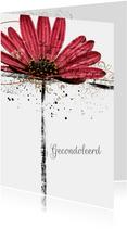 Condoleancekaart gerbera flower