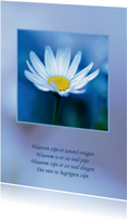 Condoleancekaart Madeliefje