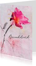 Condoleancekaart roze roos steun