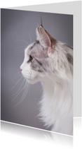 Dierenkaart - Kat portret