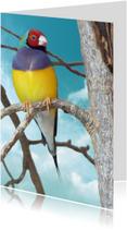 Dierenkaart tropisch vogeltje