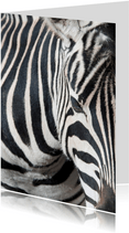 Dierenkaart zebra