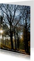 Donker bomenpad met lage zon