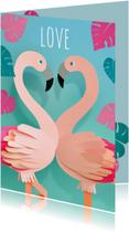 flamingo's love