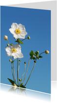 Foto met mooie witte bloemen