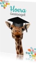 Geslaagd giraf met vierkante hoed