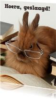 Geslaagd konijn
