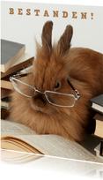 Glückwunschkarte Bestanden Kaninchen