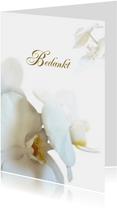Hemels witte bedankt orchidee