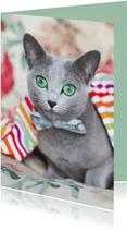 Kaart met regenboogkleuren en grijze kat met een strikje