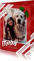 Kerstkaart grote foto, rood, hulst en Merry Christmas!