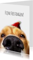 Kerstkaart hondensnuit met muts