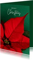 Kerstkaart met rode kerstster