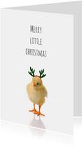 Kerstkuikentje-isf