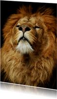 Leeuw Ceasar