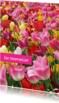 Lente tulpen bont gekleurd OT