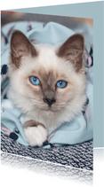 Lieve kaart met witte kitten en blauwe ogen