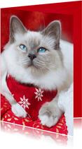 Lieve kerstgroet met schattige kitten
