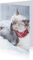 Lieve kerstkaart van twee knuffelende katjes