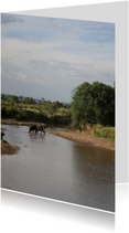 Olifanten Kenia