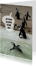 Pinguin Coaches