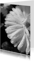 Rouwkaart bedankkaart bloem dauwdruppels - SK