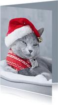 Schattig kerstkaartje met grijze kat en kerstmuts