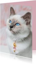 Schattige liefdeskaart van kitten met roze achtergrond