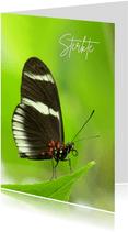 Sterkte Vlinder in het groen