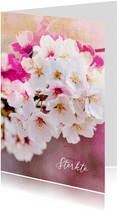 Sterktekaart kersenbloesem tak