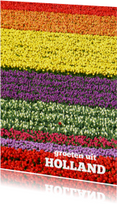 Tulpen kleurenpalet - bloemenkaart
