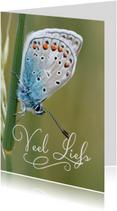 Veel liefs met vlinder
