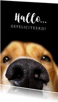 Verjaardagskaart grappige hond