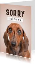 Verjaardagskaart te laat sorry hond humor