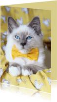 Vrolijke verjaardagskaart van kitten met geel strikje