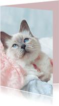 Vrolijke verjaardagskaart van kitten met roze halsbandje