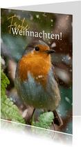 Weihnachts-Fotokarte Rotkehlchen