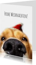 Weihnachtskarte Hundeschnauze mit Weihnachtsmütze