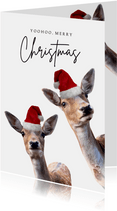 Weihnachtskarte lustige Rehe mit Weihnachtsmütze