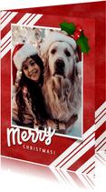 Weihnachtskarte merry christmas rot mit Stechpalme & Foto