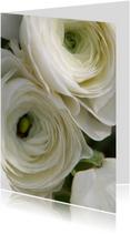 Witte bloemen av