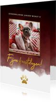 Zakelijke kerstkaart dieren branche foto, waterverf & pootje