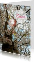 Zomaar bloesemboom lente