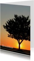 Zonsondergang achter een boom