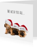 3 hondjes kerstmuts-isf